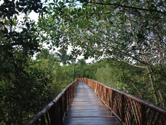 Royal Club at Occidental Grand Cozumel: Bridge to pool area