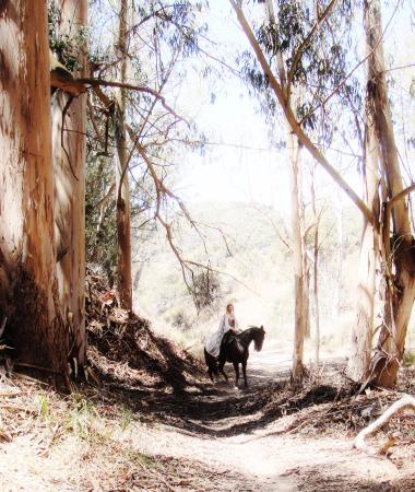Los Osos, CA: Eucalyptus Forests