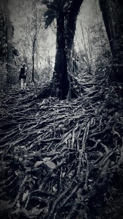 Middleham Falls trail
