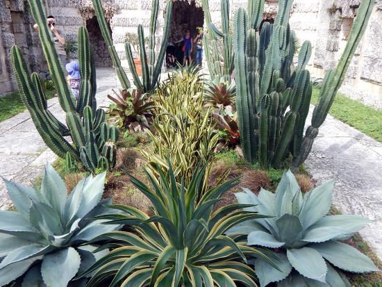 Vizcaya Museum And Gardens: Cactus Garden Outside Vizcaya Villa