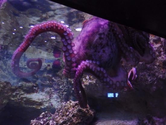 poulpe - Picture of Aquarium de Paris - CineAqua, Paris - TripAdvisor