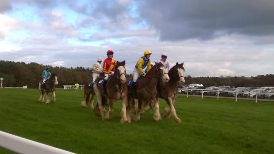 Exeter Racecourse: Clydesdale racing