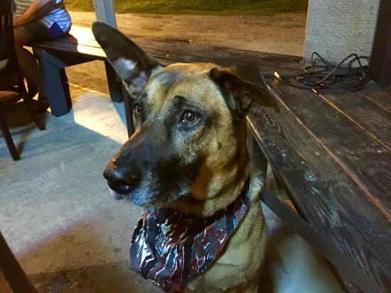 Micco, FL: Dog friendly tables outside