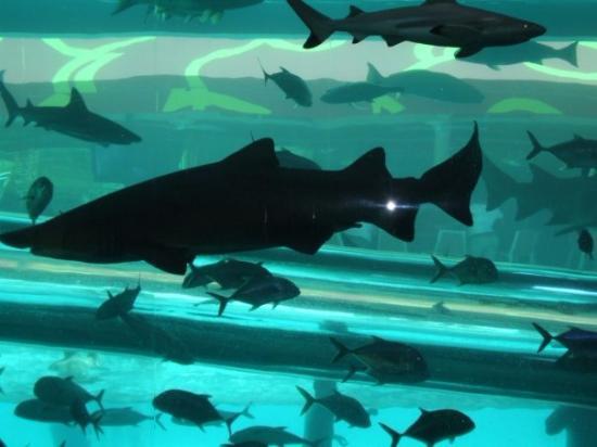 Golden Nugget Hotel: Shark Tank Pool