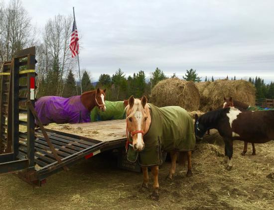 Lake Clear, Nova York: Lovely, gentle horses