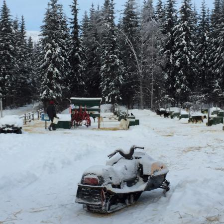 Chena Hot Springs Resort: Near the kennels