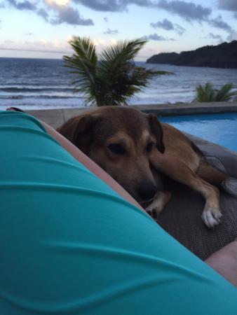 Marigot, دومينيكا: Their dog is so friendly.