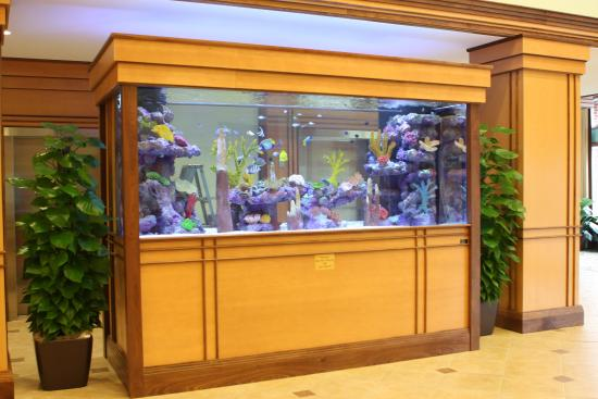 Barboursville, Wirginia Zachodnia: 1200 gallon Aquarium