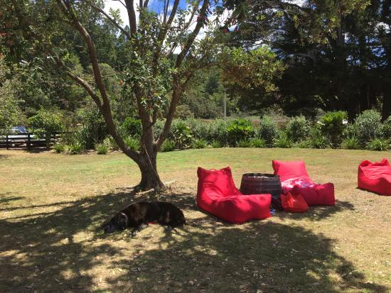 Waiheke Island, New Zealand: Just a dog day afternoon