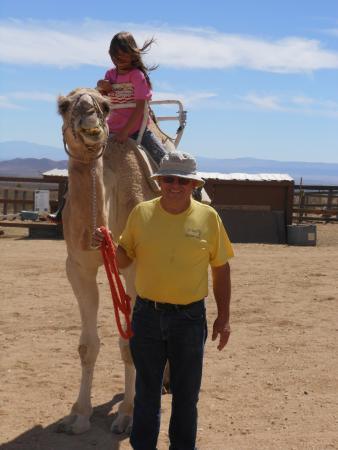 Rosamond, Kalifornia: Dromedary camel