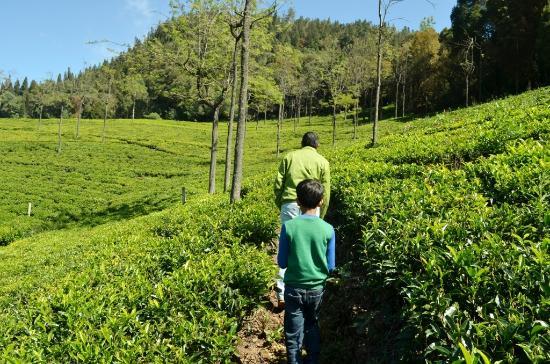 Tranquilitea Gourmet Nilgiri Teas