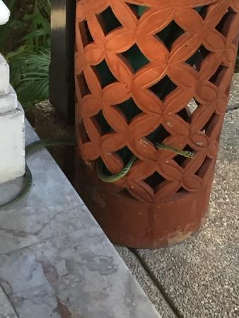 Banyan Tree Bintan: Auf unserer Terrasse!!!