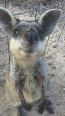 Byford, Avustralya: Cohunu Koala Park