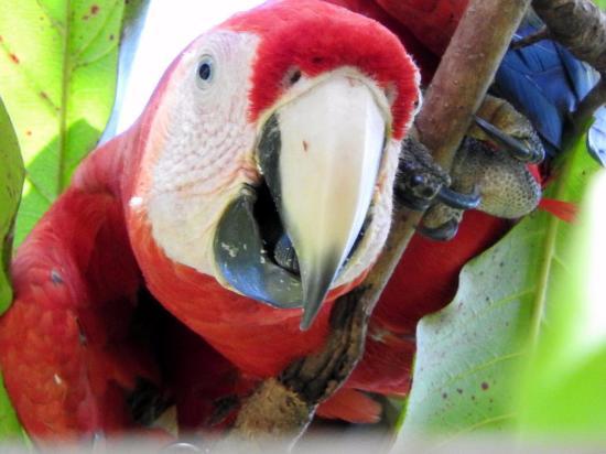 Playa Nicuesa Rainforest Lodge: Tiere