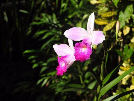 Playa Nicuesa Rainforest Lodge: Pflanzen