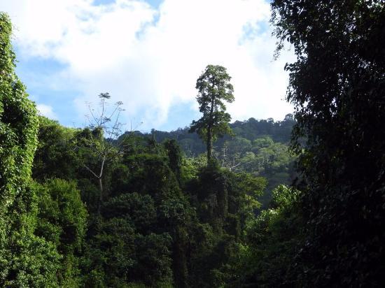 Playa Nicuesa Rainforest Lodge: Wasserfalltour