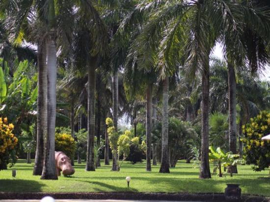Sunset Villa Luxury Boutique Resort: The lawn