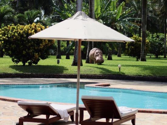 Sunset Villa Luxury Boutique Resort: Pool area beside the lawn
