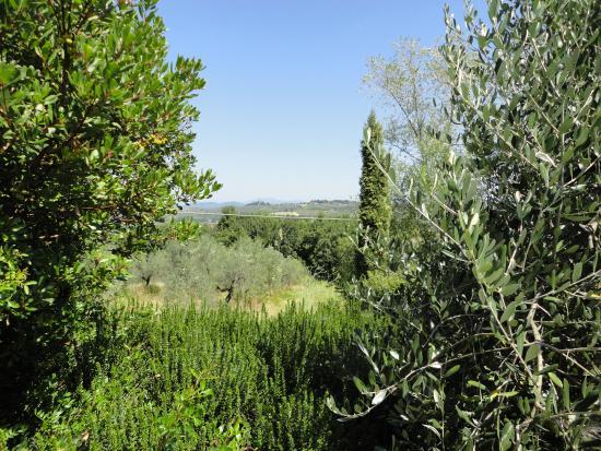 Монтеспертоли, Италия: Aussicht
