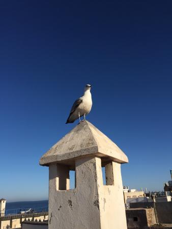 E Booking Essaouira photo6.jpg - Picture of Riad Belle Essaouira, Essaouira - TripAdvisor