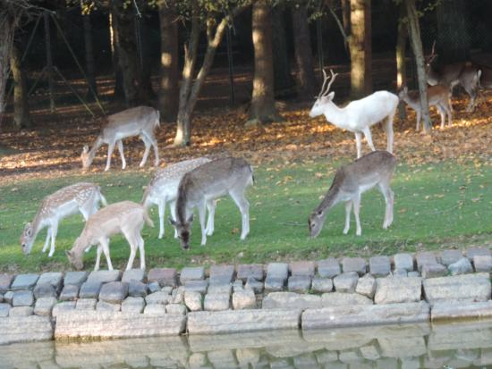 Plan parc des gayeulles rennes photo de parc des for Parc animaux yvelines
