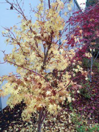 Silver Cloud Inn Redmond: Colorful trees
