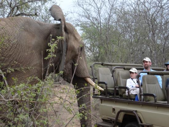 Naledi Bushcamp and Enkoveni Camp: Elephant saying hi