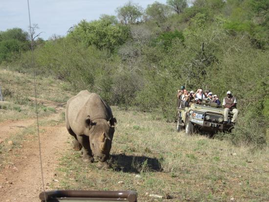 Naledi Bushcamp and Enkoveni Camp: Rhino coming to check us out