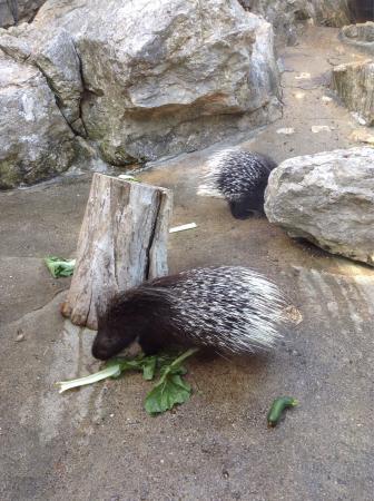 Parc Zoologique La Barben