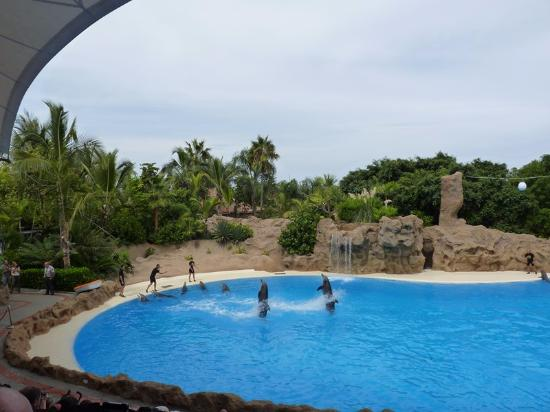 Въезд - Picture of Loro Parque, Puerto de la Cruz ...