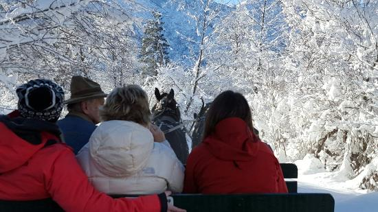 Icicle Outfitters Winter Sleigh Ride: 20151222_114950_large.jpg