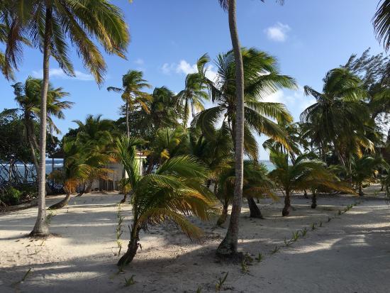 Pelican Beach - South Water Caye: photo0.jpg