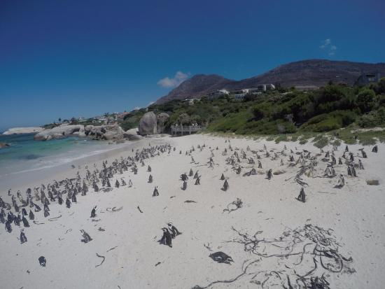 Taste the Cape Travel & Tours - Day Tours: visiting pinguins