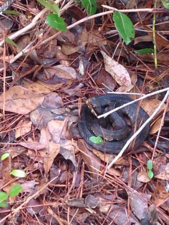 Cheraw, Carolina Selatan: photo2.jpg