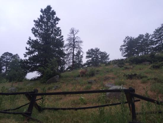 Aspenglen Campground, Rocky Mountain National Park : photo0.jpg