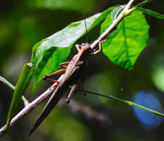 Manuel Antonio Tico Tours: Insect
