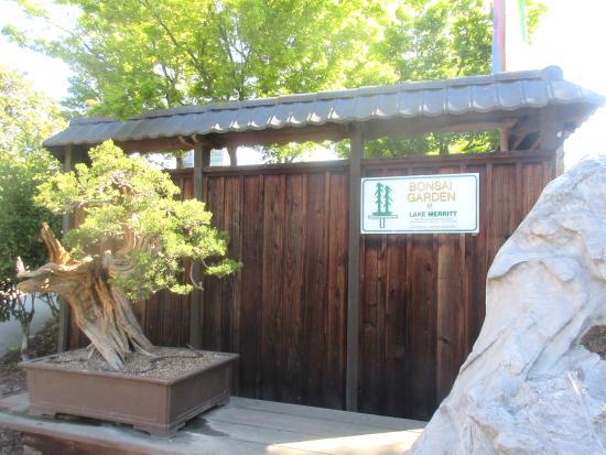 Bonsai Garden At Lake Merritt Oakland Ca Gsbf Bonsai Garden At Lake Merritt Tripadvisor