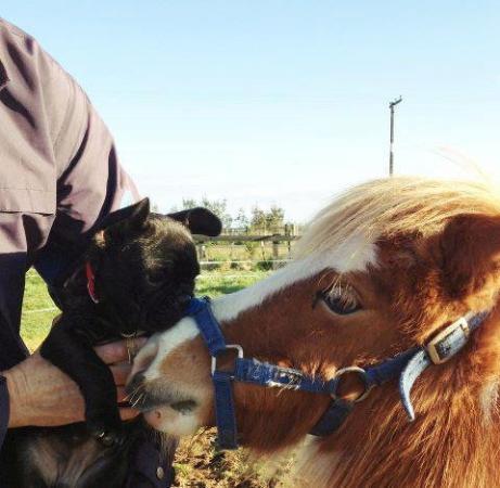 New Plymouth, Nieuw-Zeeland: One of our mini horses