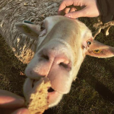 Varaire, France : Distraction avec le smoutons
