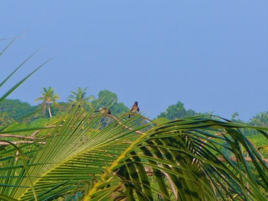 Shangri-Lanka Villa: birds in the palm trees in the garden at the back