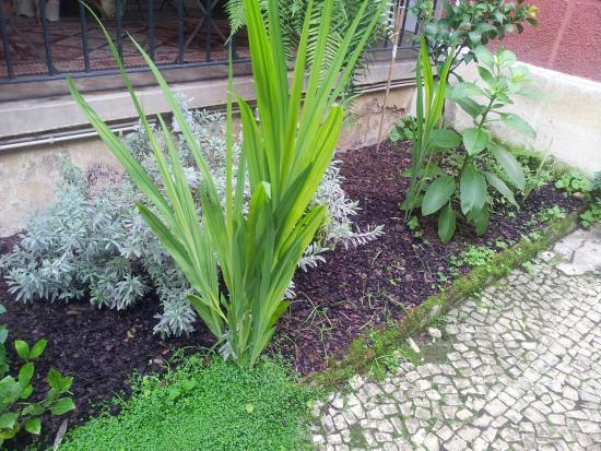 Whatever Art Bed & Breakfast: garden/terrace detail