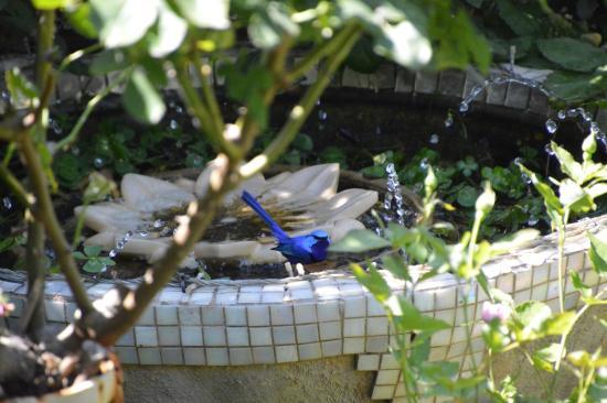 Donnybrook, Australia: Birdlife everywhere and oh so pretty