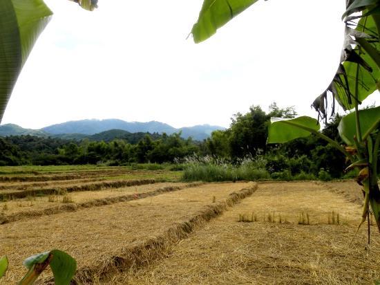 Muang Sing, Laos: Adima Guesthouse - vue sur les rizières