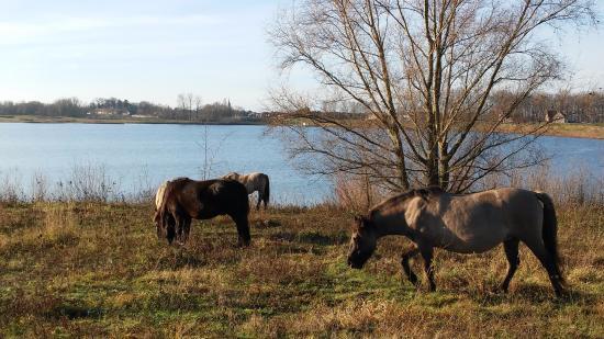 Dilsen-Stokkem, België: wandelen naar De Wissen en Stokkem, vertrek vanaf De Maretak