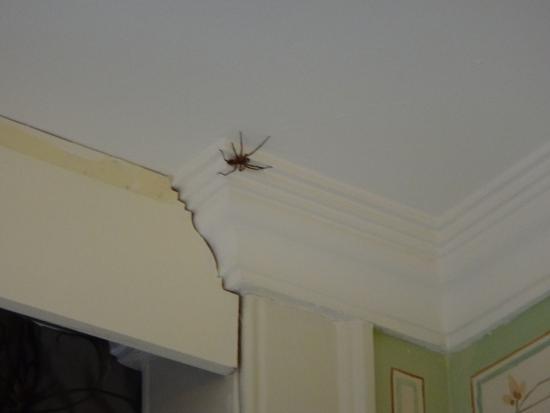 Tivoli Palácio de Seteais: Aranha no quarto