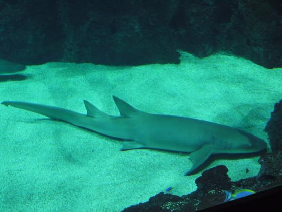 img 20151111 wa0104 large jpg photo de aquarium de lyon lyon tripadvisor