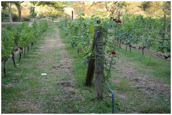 Village Farm & Winery: Vineyard