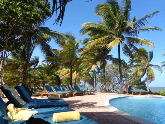 Hamanasi Adventure and Dive Resort: Boxing day at the pool