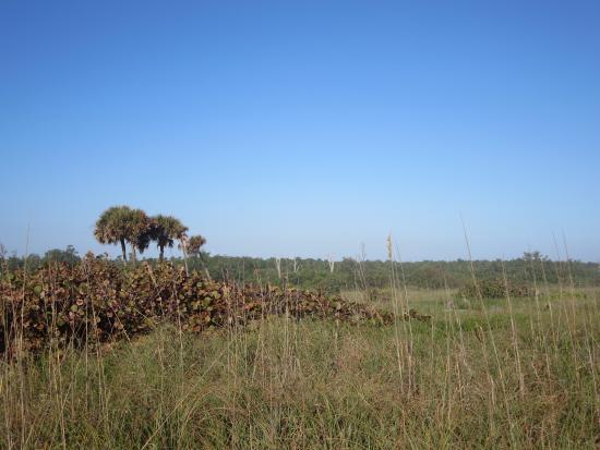 Hutchinson Island, فلوريدا: Bluff