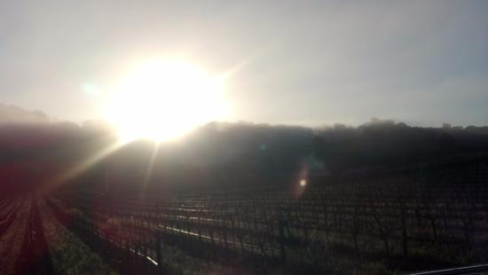 Napa Valley, CA: Sunshine